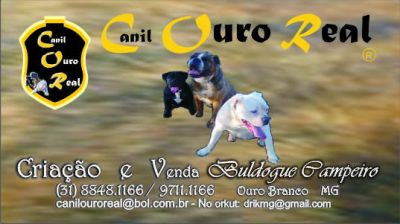 Canil Ouro Real - Buldogue Campeiro