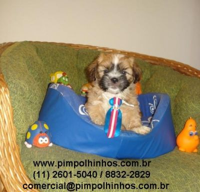 LHASA APSO Machinho